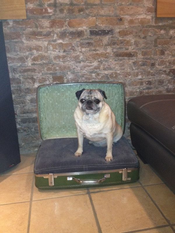 Dog bed suitcase